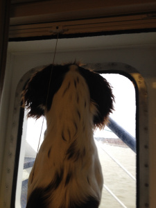 dexter watching the ferry leave the UK