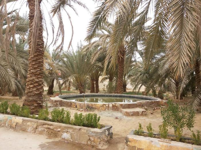 Amun Oasis Featured In The Luna Legacy