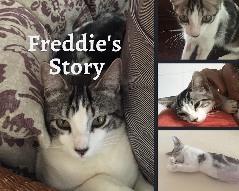 Freddie's Coronavirus Story
