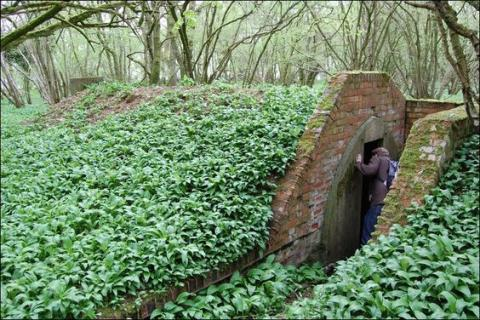 Hidden World War II Air Raid Shelter