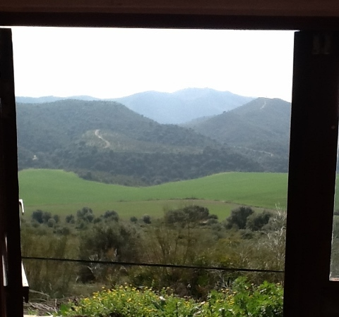 View From My Writing Room